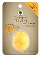 Organic Harvest Shea Lip Balm (Pack of 2)