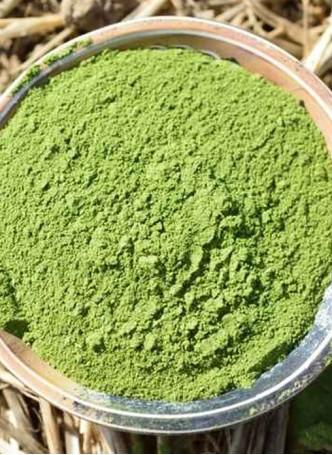 Woods and Petals Organic Moringa Powder (Pack of 2)